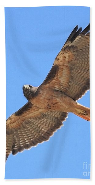 Red Tailed Hawk In Flight Bath Towel