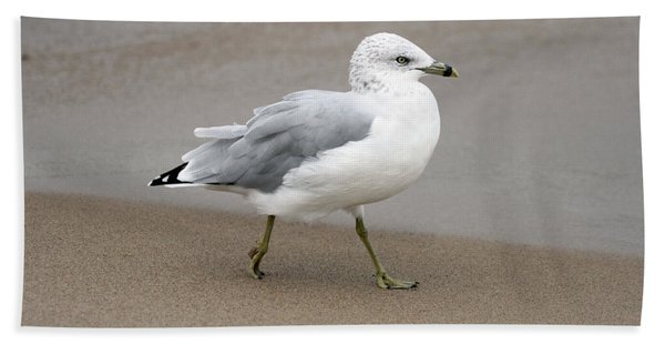 Ring Billed Gull Hand Towel