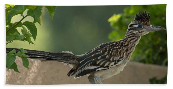 Roadrunner Closeup Bath Towel
