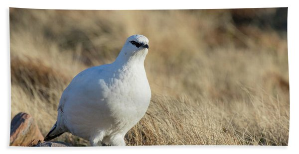 Rock Ptarmigan Hand Towel