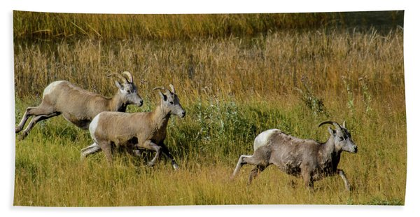 Rocky Mountain Goats 7410 Bath Towel