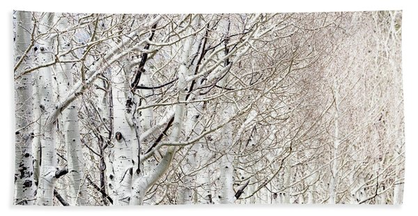 Row Of White Birch Trees Hand Towel
