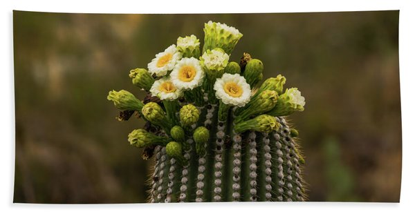 Saguaro National Park Cactus Blooms Hand Towel