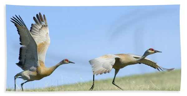 Sandhill Cranes Taking Flight Bath Towel