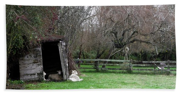 Bath Towel featuring the photograph Sheep Shed by Lorraine Devon Wilke
