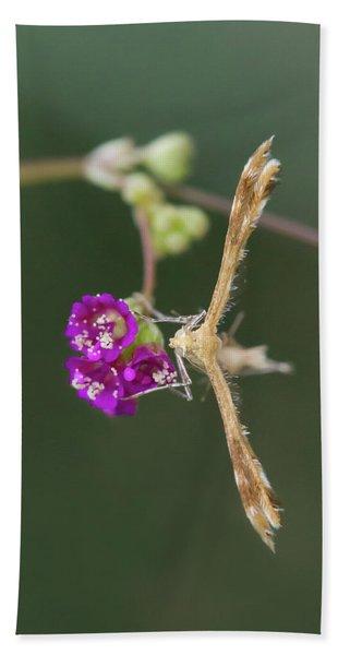 Spiderling Plume Moth On Wineflower Bath Towel