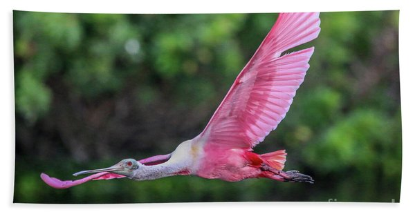 Bath Towel featuring the photograph Spoony In Flight by Tom Claud