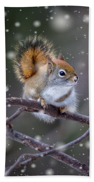Bath Towel featuring the photograph Squirrel Balancing Act by Patti Deters