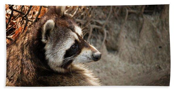 Staring Raccooon Hand Towel
