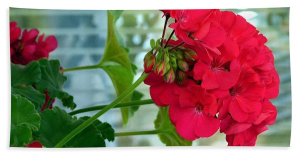 Stunning Red Geranium Hand Towel