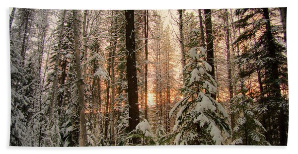 Sun Of Winter Trees Hand Towel
