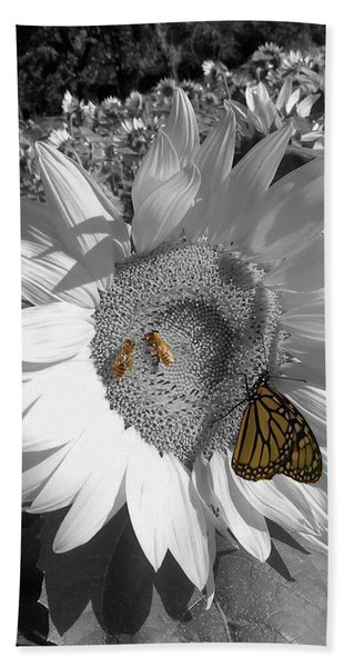 Sunflower In Black And White Hand Towel