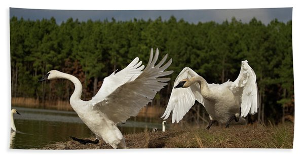 Swan Fight Hand Towel
