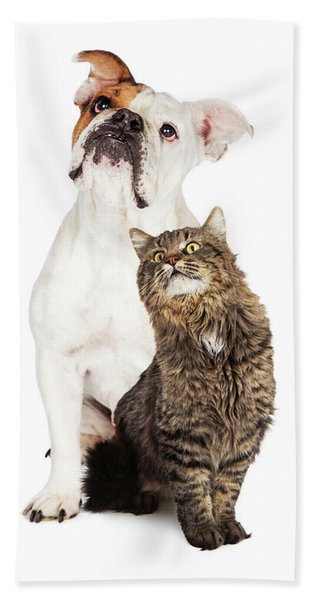 Tabby Cat And Bulldog Together Looking Up Hand Towel