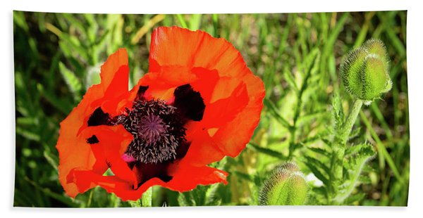 Bath Towel featuring the photograph Teton Poppy by Greg Norrell