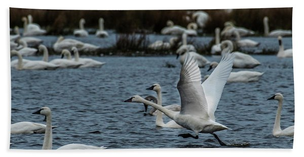 Tundra Swan And Liftoff Head Start Bath Towel
