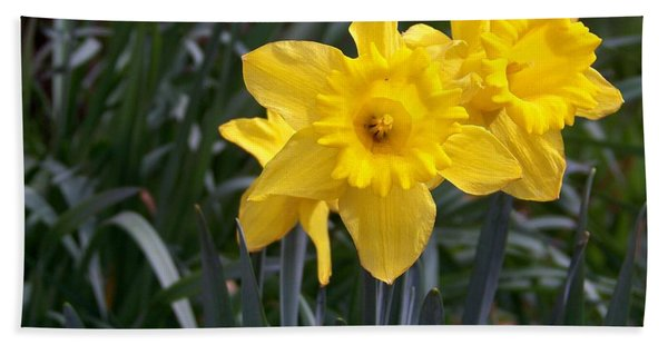 Two Daffodils Hand Towel