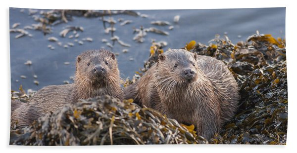 Two Young European Otters Bath Towel