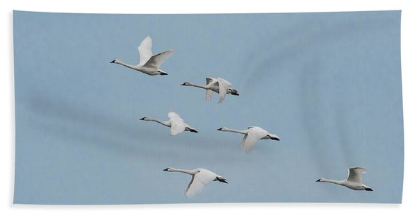 Whistling Swan In Flight Bath Towel