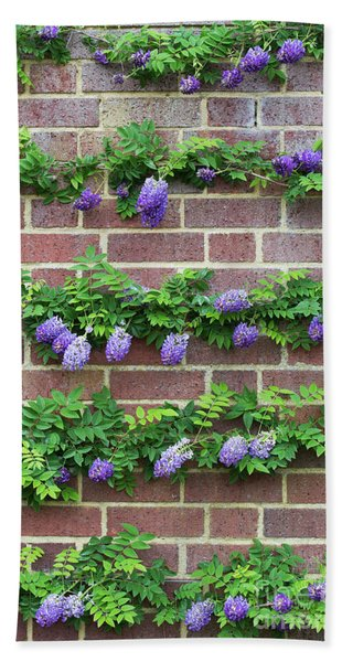 Wisteria Frutescens Longwood Purple Bath Towel
