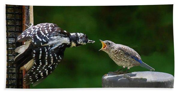Woodpecker Feeding Bluebird Bath Towel