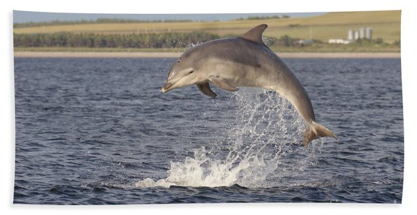 Young Bottlenose Dolphin - Scotland #13 Bath Towel