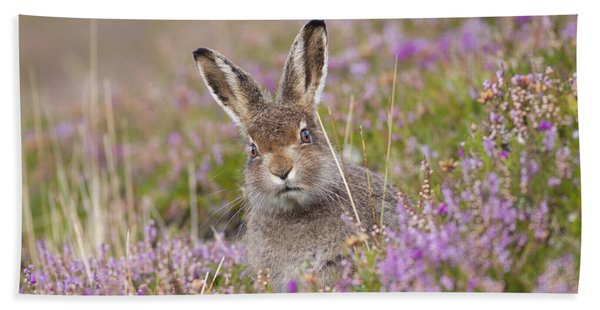 Young Mountain Hare In Purple Heather Hand Towel