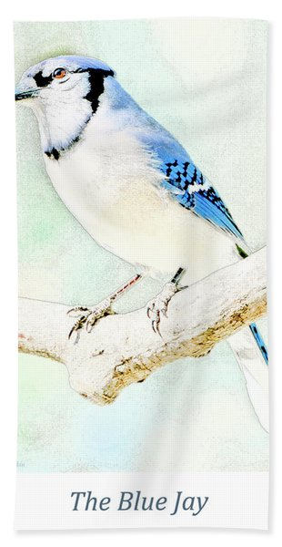 Blue Jay Bath Towel
