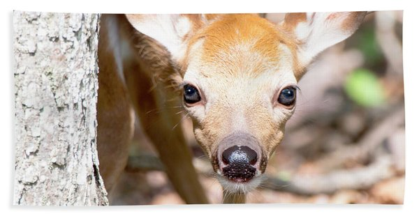 White-tailed Deer Fawn, Animal Portrait Bath Towel