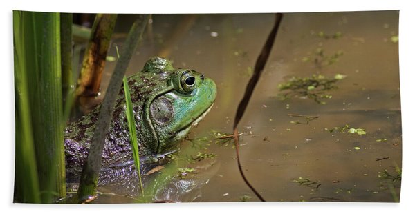 A Frog Waits Bath Towel
