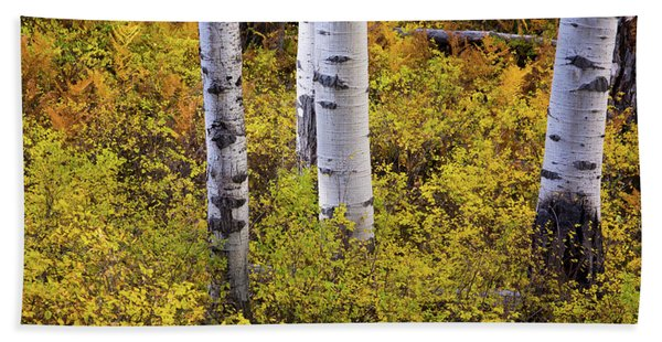 Hand Towel featuring the photograph Autumn Contrasts by John De Bord