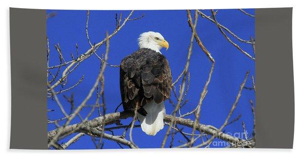 Bald Eagle And Blue Sky Hand Towel