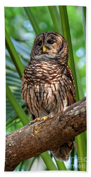 Barred Owl On Perch Hand Towel