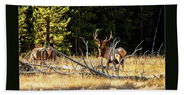 Bull Elk Hand Towel