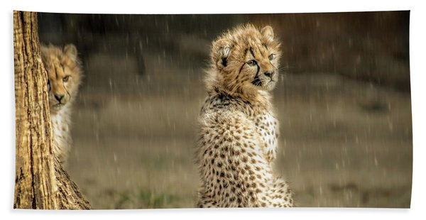 Cheetah Cubs And Rain 0168 Bath Towel