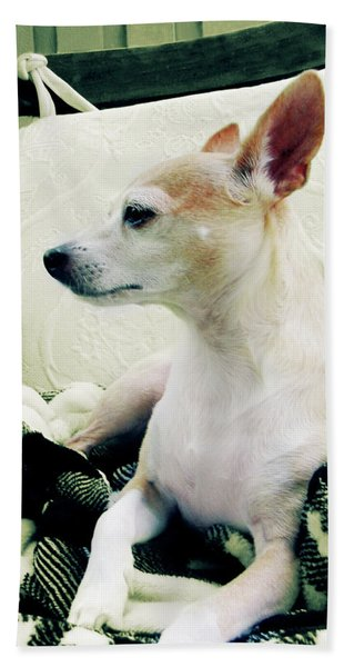 Chihuahua  Portrait  Bath Towel