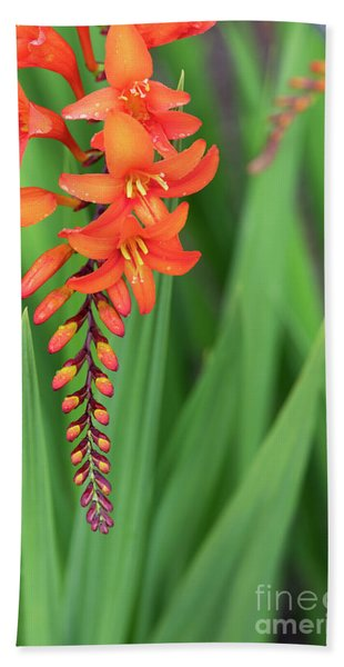 Crocosmia Zeal Unnamed Flower Bath Towel