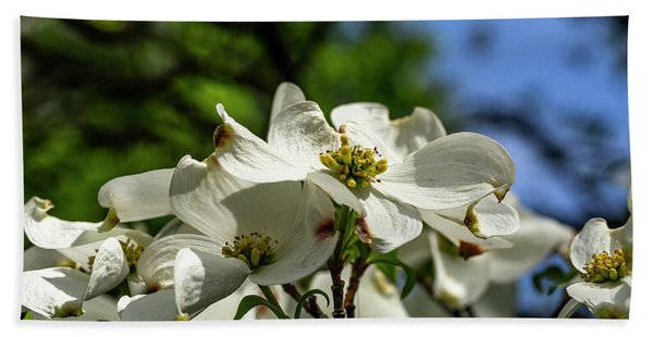 Dogwood Day Afternoon Hand Towel