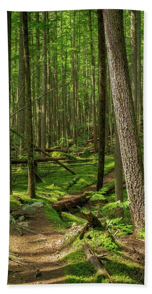 Forest Trail Hand Towel