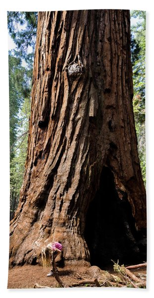 Giant Sequoia At Mariposa Grove Bath Towel