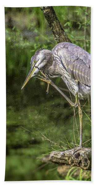 Great Blue Heron Itch Hand Towel