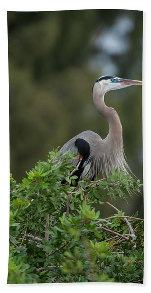 Great Blue Heron Portrait Bath Towel