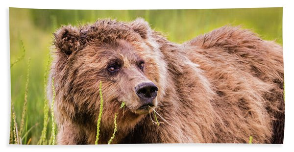 Grizzly In Lake Clark National Park, Alaska Hand Towel