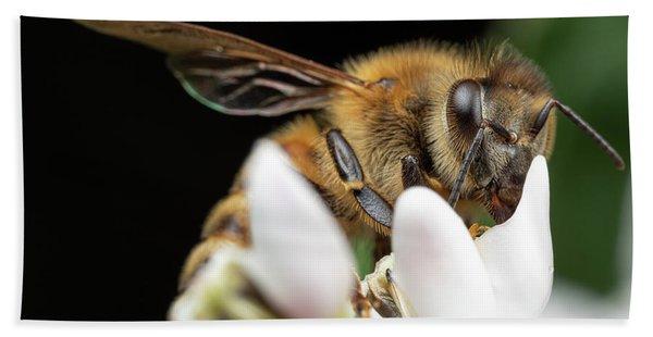 Honeybee Peeking Bath Towel