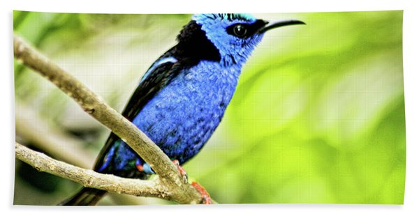 Red Legged Honeycreeper Bath Towel
