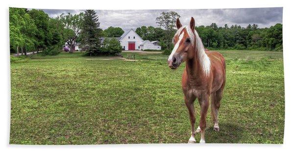 Horse In Pasture Hand Towel