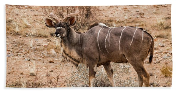 Kudu In The Kalahari Desert, Namibia Bath Towel
