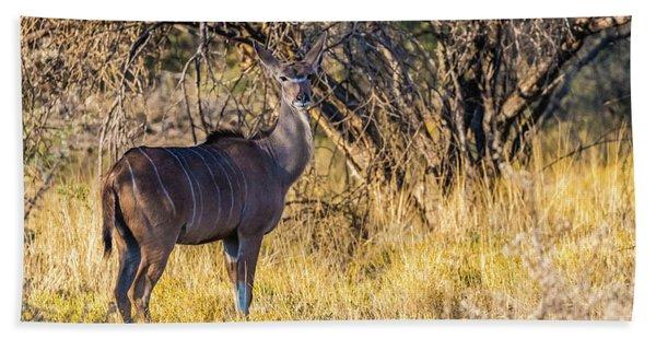 Kudu, Namibia Bath Towel