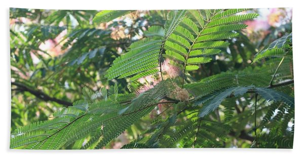 Mimosa Tree Blooms And Fronds Hand Towel