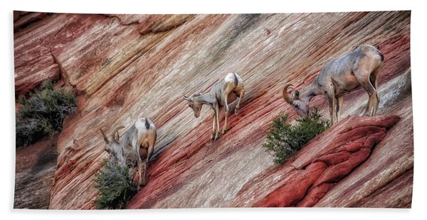 Nimble Mountain Goats 5694 Bath Towel